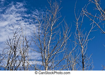 The dead tree on blue sky background