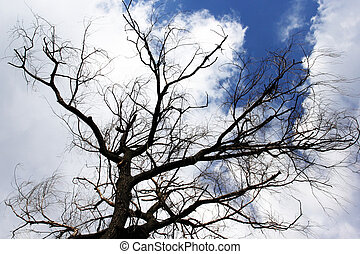 The dead tree on sky background