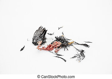 The decaying corpse of dead bird on the winter snow background. The animal caught and ate the caught prey. The remains of the hunter's victim. The cycle of life in nature. Cold hungry time. Close-up