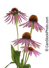 The decorative flowers
