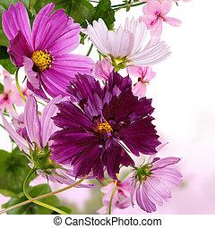The decorative garden autumn flower