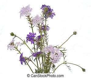 The decorative garden flower