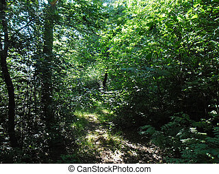 The dense forest thicket - decidous forest in the summer.