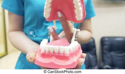 The dentist shows the structure of the mouth with the help...