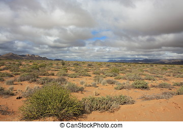 the desert namib in namibia