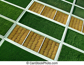 The Design corn and green grass texture