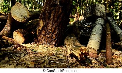 The destruction of forests. Collapsed trees in the forest. 84