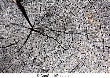 The details of the old wooden circle
