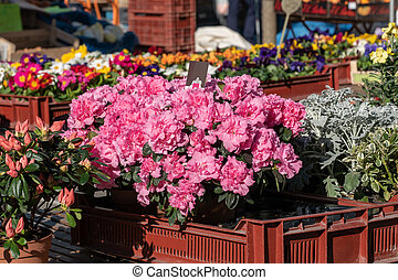 different flowers on the market