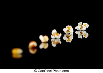 The different stages from the maize kernel to the popcorn photographed on black with reflection (Selective Focus, Focus on the last popcorn)
