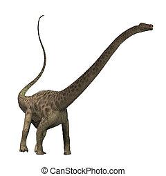 Diplodocus - The Diplodocus dinosaur was a herbivore...