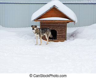 The dog comes out of the booth among the snowdrifts in winter