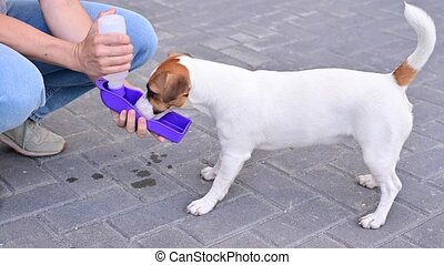 The dog drinks from a portable pet water bottle while walking with the owner.
