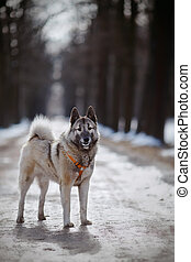 The dog for a walk in winter.