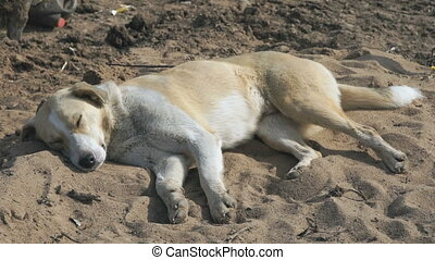 The dog has a rest lying on the sand
