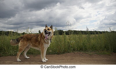 The dog in a field