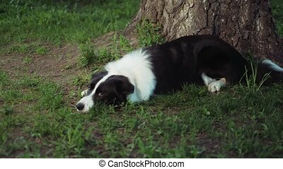 The dog in the village lies near a tree