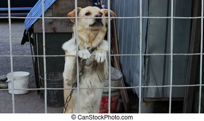 The dog is barking behind a fence. - A dog on a chain on a...