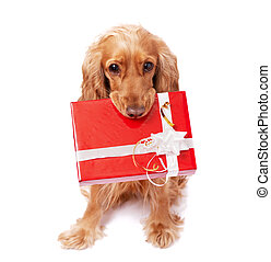The dog is holding a present