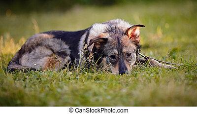 The dog lies on a grass.