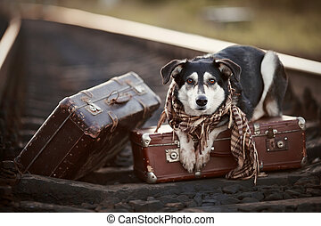 Dog on rails with suitcases. The dog looks for the house. The dog waits for the owner. The lost dog. Mongrel on the road. Dog on rails. Dog with suitcases. Not purebred dog on the road. Traveler. Vagrant dog. Tramp.