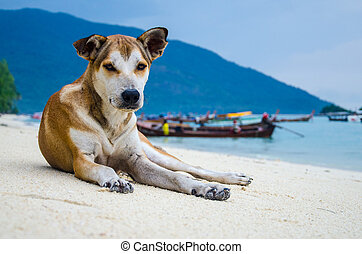 the dog on sand in thailand