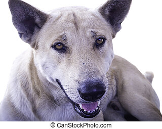 The dog on white background