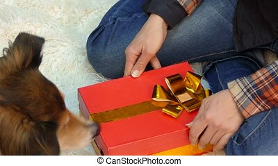 The dog opens a gift in which lie the cookies