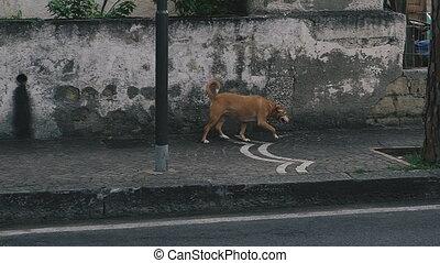The dog runs along the street.