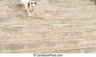 The dog runs down the stairs