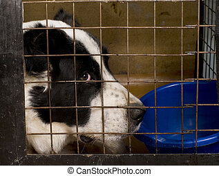 The dog sitting in a cage.
