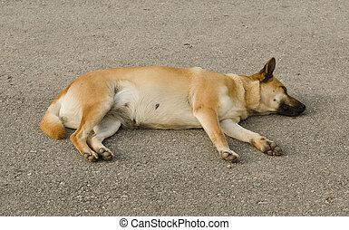 the dog sleeping on ground