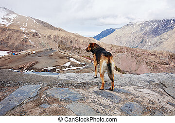 The dog standing on top