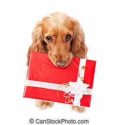 The dog with the beautiful present