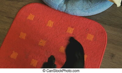 the dog's toy-terrier chasing its tail on a red mat