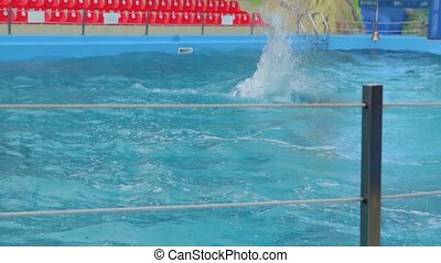 The Dolphins In The Pool - The dolphins in the pool dolphin...