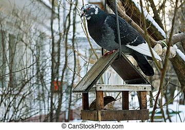 The dove on the bird feeder.