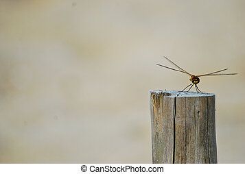 dragonfly hold on stump