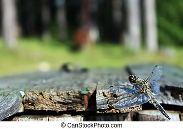 The dragonfly sits on the boards on the grass background