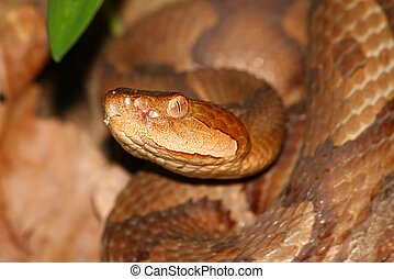 The Dreaded Copperhead