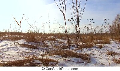 The dried grass field or hay field in the snow covered...