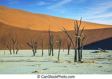 The dried trees among orange sand dunes