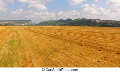 The drone flies over the harvested wheat field, on the horizon of the mountain and forest