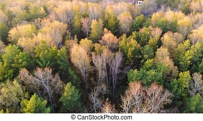 The drone is flying over the forest. View from above.Autumn,...