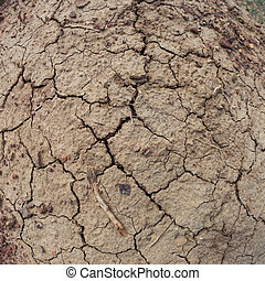 The dry cracked earth