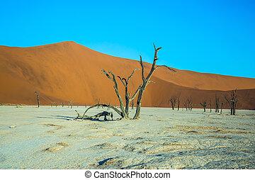 The dry tree among the huge dunes