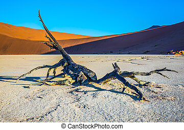 The dunes and dried trees
