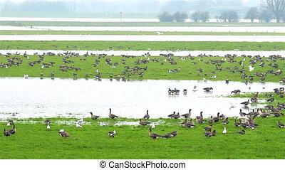 The dutch delta birds near several river streams in The...
