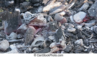 the dying coals in the fire