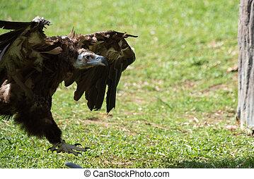 The eagle above the earth